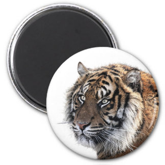 Tiger wild jungle animal photo magnet