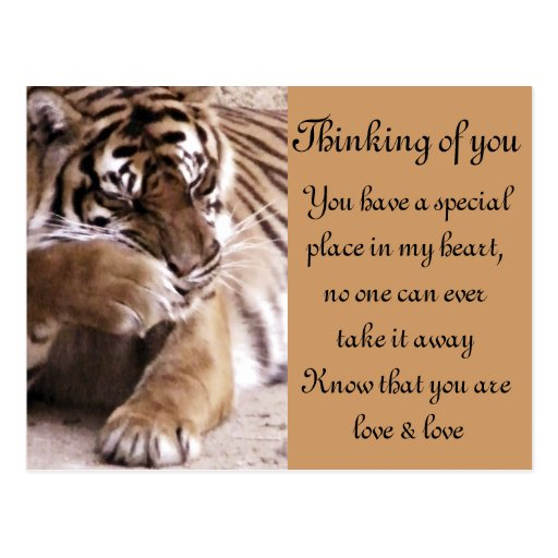 Tiger with a heart_ postcards