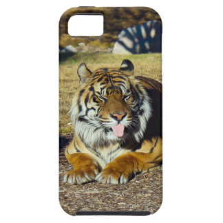 Tiger with a 'tude iPhone SE/5/5s case