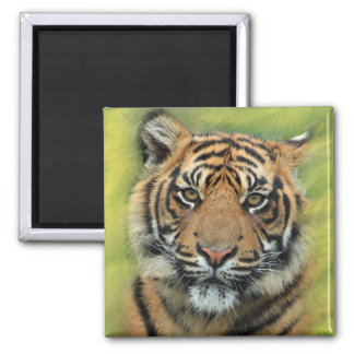 Tiger with Green & Yellow Background 2 Inch Square Magnet