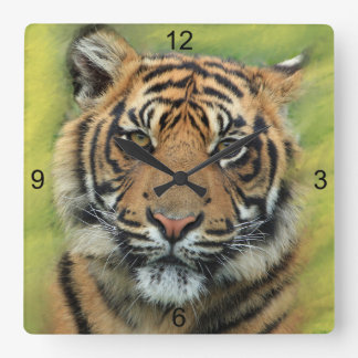 Tiger with Green & Yellow Background Square Wall Clock