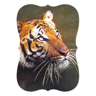Tiger With Long Whiskers Pokes Head Out of Water Card