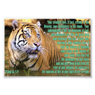 Tiger with Psalm 36:5-9 Art Photo