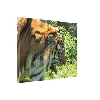 Tiger Wrapped Canvas Print