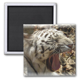 Tiger Yawn Square Magnet  Magnets