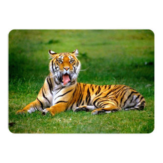 Tiger Yawning Card