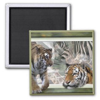 Tiger, Zebra, Giraffe, Lovers Gifts 2 Inch Square Magnet