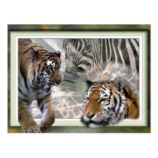 Tiger, Zebra, Giraffe, Lovers Gifts Postcard