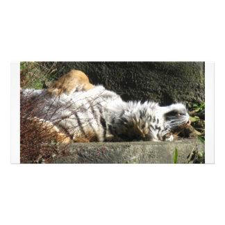 Tigerbelly Card