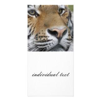 Tigerface closeup card