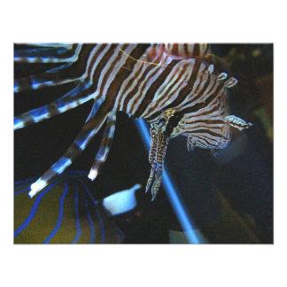 TigerFish Comunicado Personalizado
