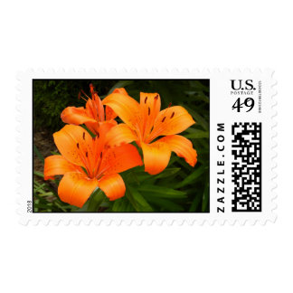Tigerlily Stamps