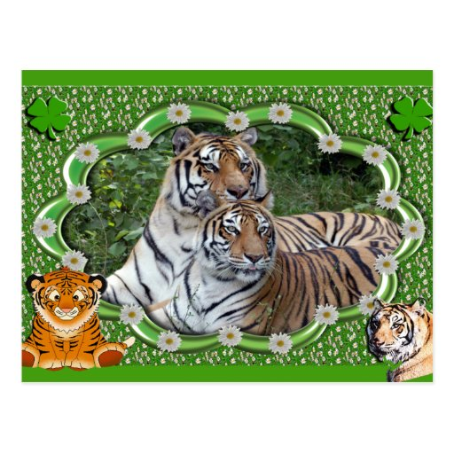 tigers-2-st-patricks-0005 postal
