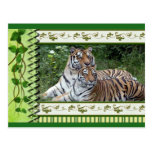 tigers-2-st-patricks-0011 postales
