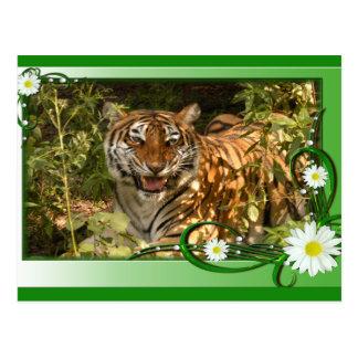 tigers-2-st-patricks-0042 tarjeta postal