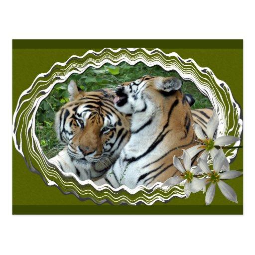tigers-2-st-patricks-0054 postal