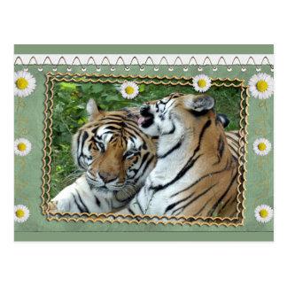 tigers-2-st-patricks-0076 tarjetas postales