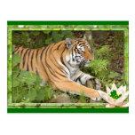 tigers-3-st-patricks-0025 tarjetas postales