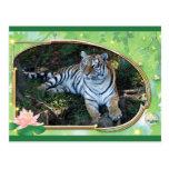 tigers-3-st-patricks-0027 tarjetas postales