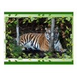 tigers-3-st-patricks-0055 tarjetas postales