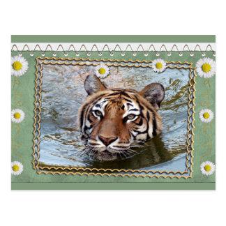 tigers-3-st-patricks-0076 tarjetas postales