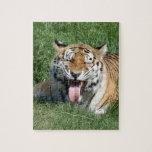 tigers-4-2 puzzle con fotos