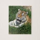 tigers-4-5 rompecabeza con fotos