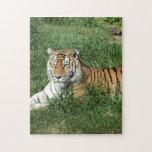 tigers-4-7 rompecabeza con fotos