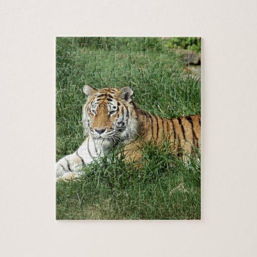 tigers-4-7 rompecabezas con fotos
