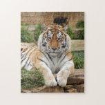 tigers-4-8 puzzles