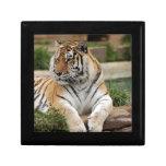 tigers-4-9 caja de joyas