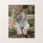 tigers-4-9 rompecabeza con fotos
