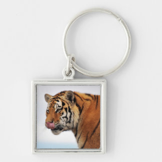 Tigers appetite Silver-Colored square keychain