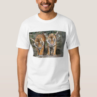 Tigers at Auckland Zoo T-Shirt