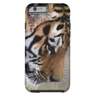 Tigers descent tough iPhone 6 case