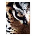 Tiger's eye postcard