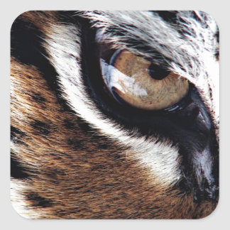 Tiger's eye square sticker