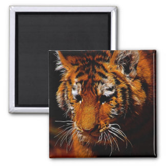Tigers eyes 2 inch square magnet