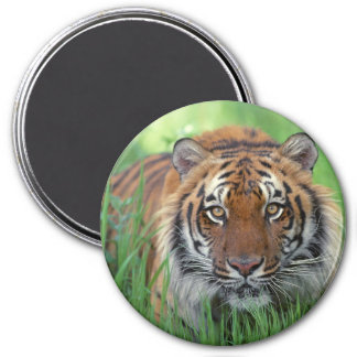 Tigers Eyes 3 Inch Round Magnet