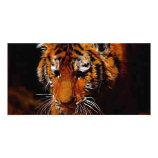 Tigers eyes card