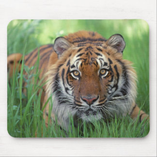 Tigers Eyes Mouse Pad