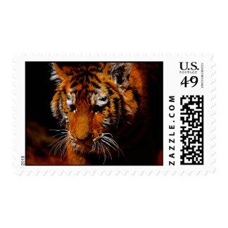 Tigers eyes postage