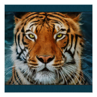 Tiger's Face Poster