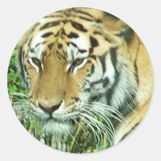 tigers face sticker