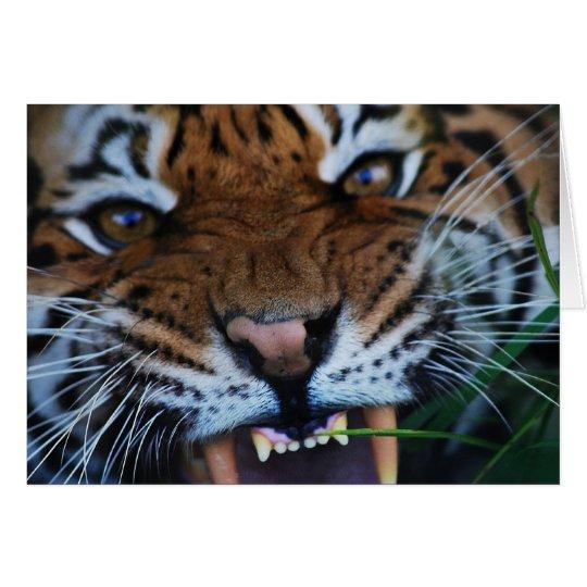 Tigers fangs card
