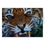 Tigers fangs greeting card