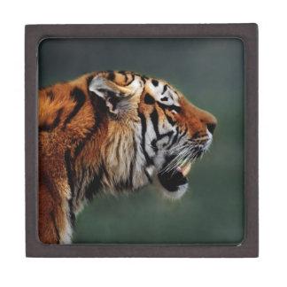 Tigers fangs keepsake box