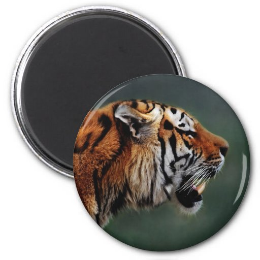 Tigers fangs magnets