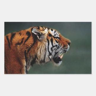 Tigers fangs rectangular sticker