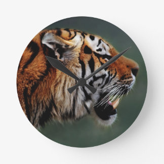 Tigers fangs round clock